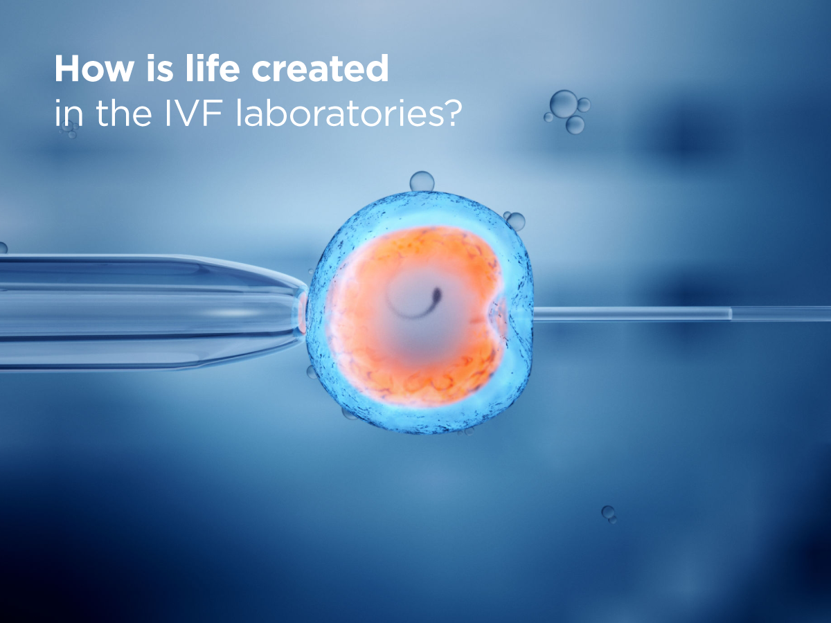 How is life created in the IVF laboratories